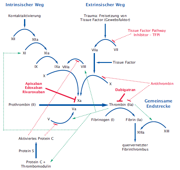 Weg extrinsischer Biochemie 3